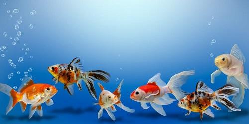 nuovi pesci