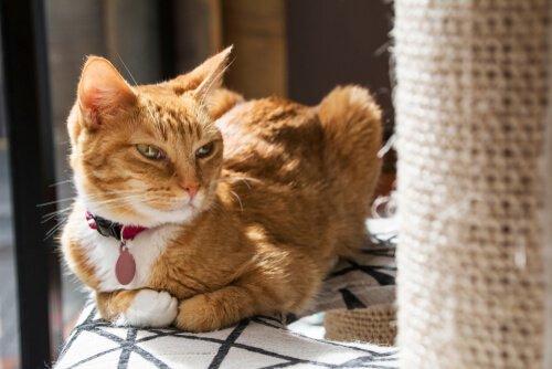 Perché il tiragraffi non piace al vostro gatto?