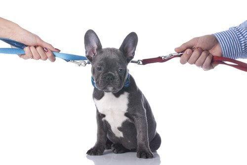Separazione o divorzio: quale futuro per il vostro animale domestico?