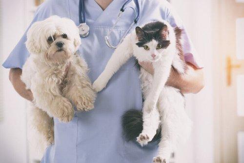 veterinario con in braccio cane e gatto