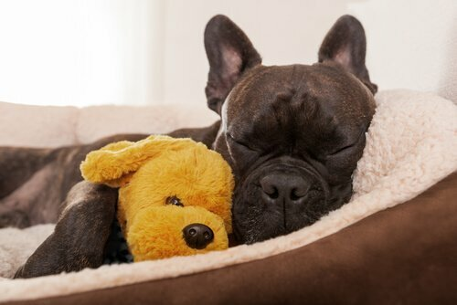 Una visita etologica per il vostro cane