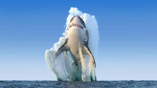 Quando e perché uno squalo attacca una persona?