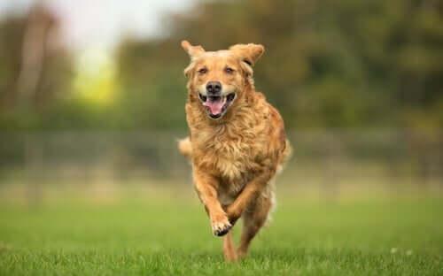l'osteopatia animale valuta e tratta le disfunzioni motorie degli animali