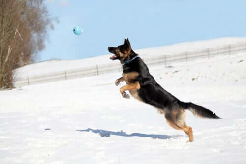 osteopatia animale per animali sportivi