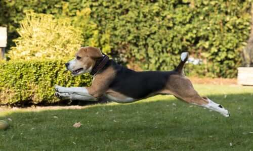 Osteopatia animale: che cos'è e serve davvero?