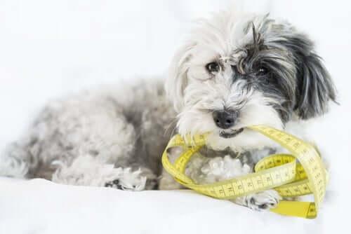 Come prendere le misure del cane?