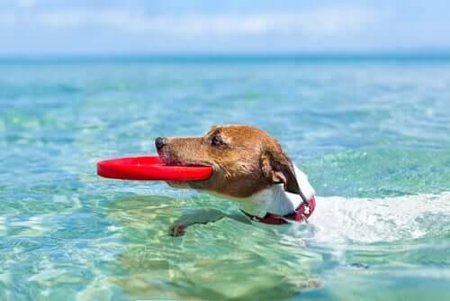 Come godersi l'estate con il proprio cane