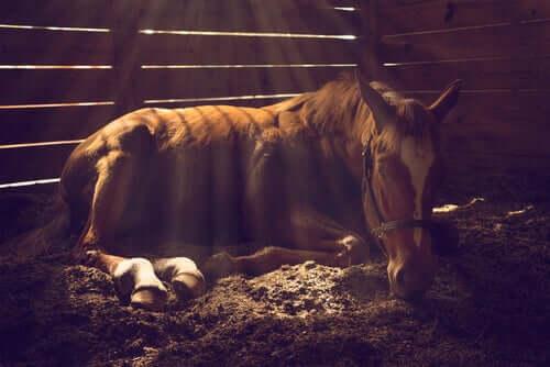 per prevenire i problemi della pelle dei cavalli, è importante prendersi cura del loro ambiente