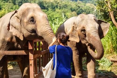 Santuario per animali: come capire se è falso?