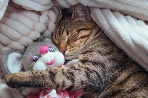 Le fasi del sonno dei gatti: curiosità su sonno e sogni dei mici