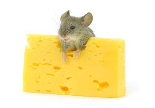 bisogna evitare di dare ai roditori i formaggi erborinati