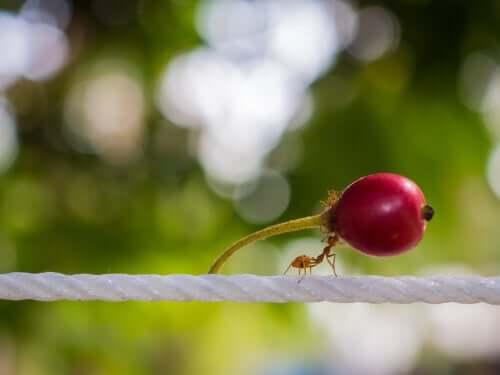 Alimentazione delle formiche: ecco cosa mangiano