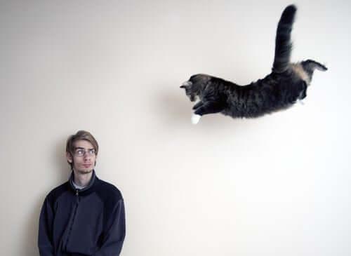 tutti i felini dovrebbero essere in grado di correre e saltare senza inconvenienti