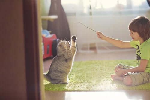 Consigli per giocare con il proprio gatto
