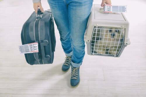Viaggiare in aereo con il vostro cane