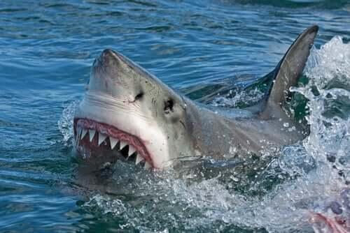 Il morso dello squalo
