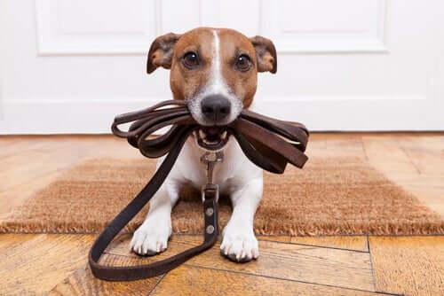 Addestrare il cane a passeggiare al guinzaglio