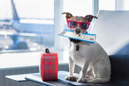Come preparare il cane per un viaggio in aereo