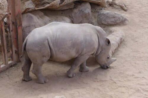Animali a rischio estinzione: quanti sono?