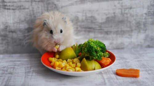 Gli snack migliori per fare felici i vostri roditori