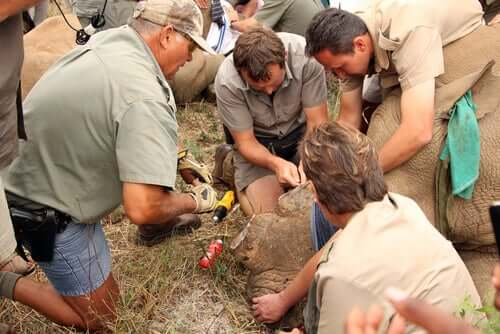La salvaguardia dei rinoceronti nelle riserve