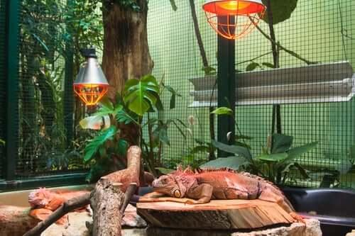 Substrato per i rettili: quale scegliere?