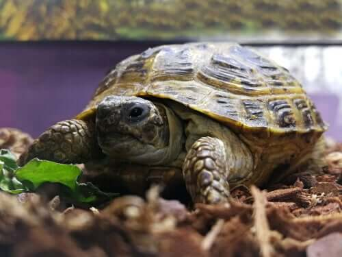 Tartaruga nel terrario