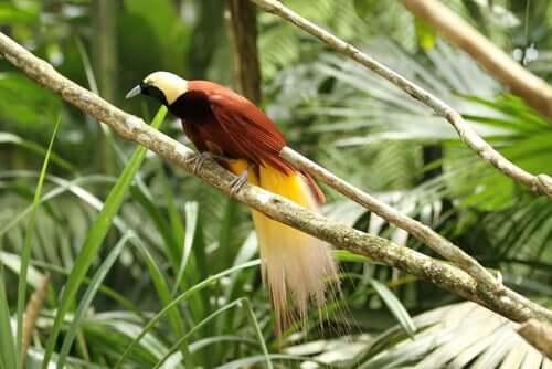 Uccelli del Paradiso: specie e caratteristiche