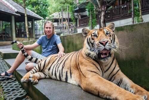 Uomo che tocca la coda di una tigre