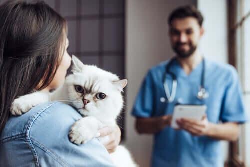 le terapie chiropratiche variano da gatto a gatto