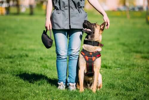 Cane mediatore e cane ben educato: quali differenze?