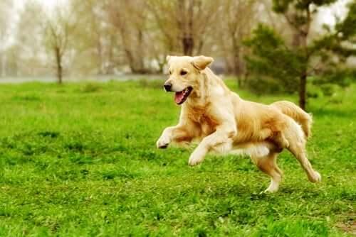 Attività fisica per cani (e padroni) in forma