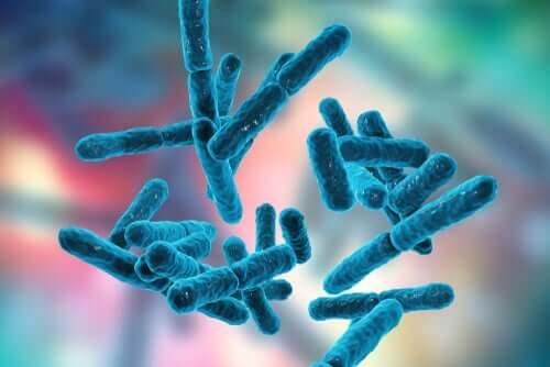 Batteri bifidobacterium flora intestinale degli animali