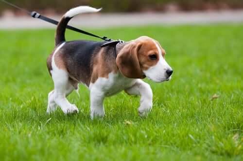 Portare a spasso il cane: cosa dice la legge
