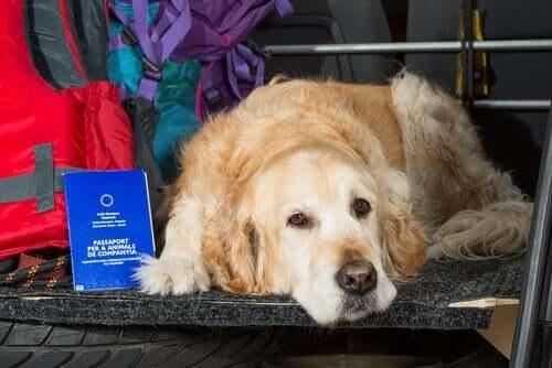per viaggiare con animali domestici dentro l'UE è necessario un passaporto europeo per gli animali da compagnia