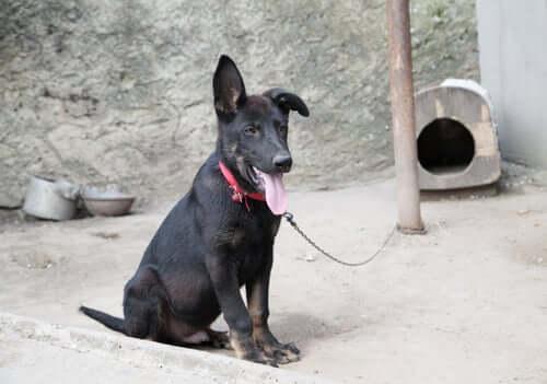 Cane legato a un palo