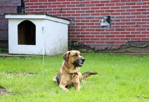 Cane legato alla cuccia