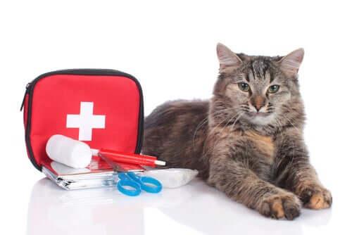 Cassetta pronto soccorso gatto