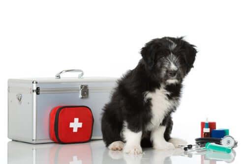 Cassetta pronto soccorso per animali domestici