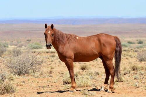 La storia del cavallo in Africa dall'antichità fino a oggi