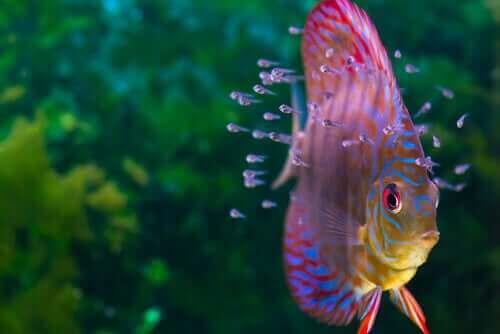 pesci da acquario colorati