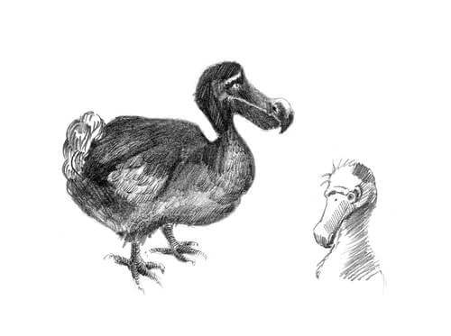 Comportamento del dodo