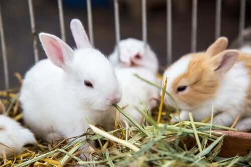 Quali sono le piante da offrire ai conigli?