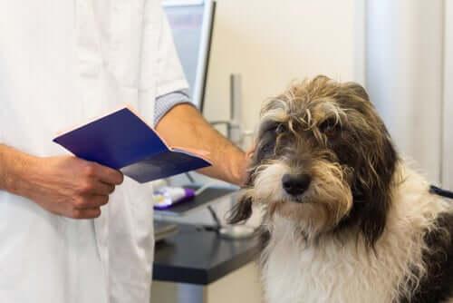 per viaggiare con animali domestici sono necessari alcuni vaccini obbligatori