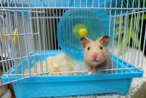 Topi e ratti come animali domestici: sempre più popolari