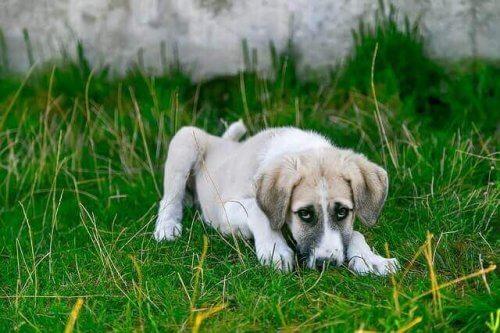 Come prendersi cura della flora intestinale degli animali