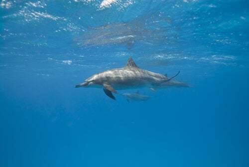 I grandi mammiferi marini dormono?