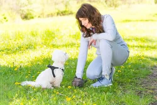 Ottenere il DNA di un cane dagli escrementi