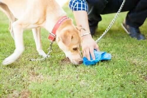 Raccogliere gli escrementi ottenere il DNA di un cane