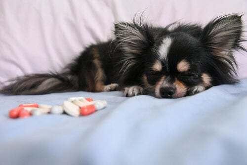L'eutanasia per gli animali domestici